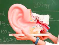 Introduction à la kinésithérapie vestibulaire : tests cliniques et prise en charge